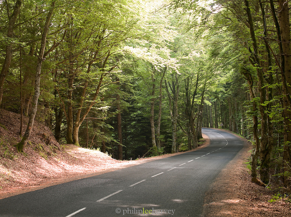 Country road near Clermont-Ferrand, France