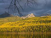 Breaking storm sunlight illuminating fall vegetation above Bowman Lake with Cerulean Ridge beyond, Glacier National Park, Montana.