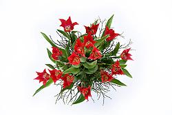 THEMENBILD - Tulpenstrauss (Tulipa) von oben auf weissem Grund // Bouquet of Tulips (Tulipa) from above on white ground, pictured in Stuttgart, Germany on 2015/02/15. EXPA Pictures © 2015, PhotoCredit: EXPA/ Eibner-Pressefoto/ Weber<br /> <br /> *****ATTENTION - OUT of GER*****