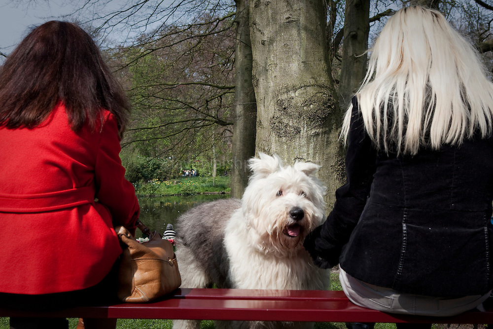 People who look like their dogs? Old English sheepdog and friends at the Keukenhof tulip and flower show in Lisse, Holland - Netherlands Editorial Use only.