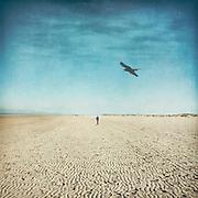 Strandwanderer und Vogel
