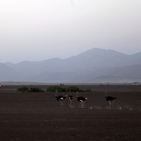 Africa, Namibia, Puros. Puros Conservancy landscape and ostriches.