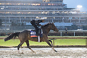 November 1-3, 2018: Breeders' Cup Horse Racing World Championships. Fourstar Crook