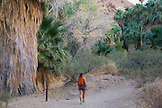 Hiker in Palm Canyon, part of the Indian Canyons in the Agua Caliente Indian Reservation, near Palm Springs, California.  Model released.