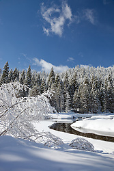 """""""Snowy Truckee River 5"""" - Photograph of a snowy Truckee River and trees in the winter."""