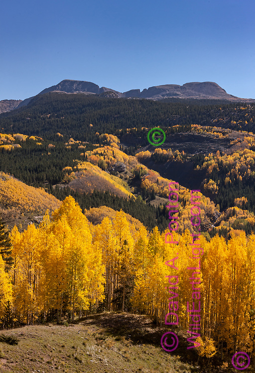 Bright golds of aspen stands highlight the autumn landscape of the San Juan Mountains in Colorado, © David A. Ponton