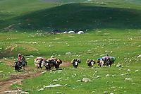 Mongolie, Province de Ovorkhangai, Transhumance des nomades à dos de yak // Mongolia, Ovorkhangai province, Nomadic transhumance with yak