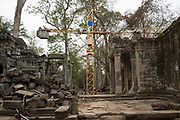 A yellow crane supports the restoration and conservation work on the ancient site of Ta Prohm temple, known as the jungle temple, in Angkor region Siem Reap Province, Cambodia, South East Asia. UNESCO inscribed Ta Prohm on the World Heritage List in 1992.