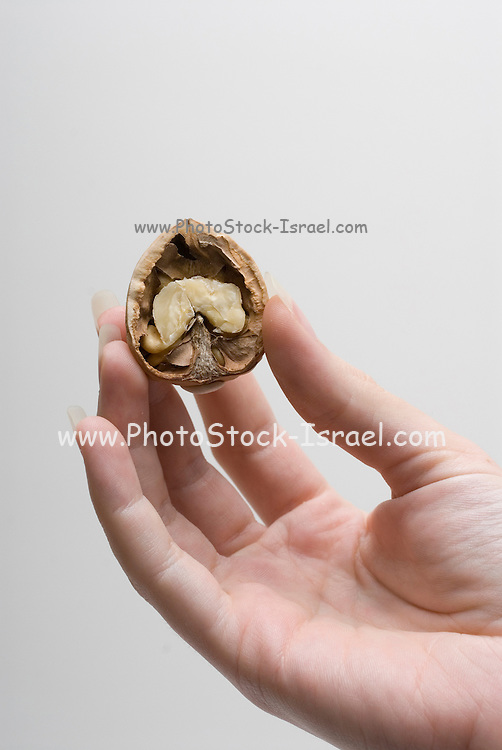 Female hand holding an open Walnut on white background