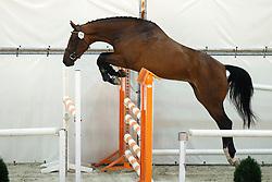 078, Hucinda<br /> Vrijspringen Nationale Merriekeuring, 3 jarige springmerries <br /> KWPN Paardendagen Ermelo 2015<br /> © Hippo Foto - Dirk Caremans