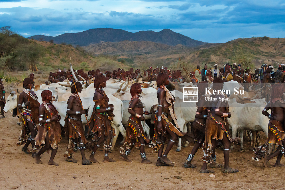 Hamar tribe people and cattle at Cattle Jumping (a ceremonial event celebrating a Hamar man comes of age) in Hamar Village, South Omo, Ethiopia