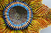 Artist Jennifer Maestre creates objects from Pencils, <br /> To make the pencil sculptures, Jennifer will take hundreds of pencils, cut them into 1-inch sections, drill a hole in each section (to turn them into beads), sharpen them all and sew them together. <br /> (©Jennifer Maestre/Exclusivepix)