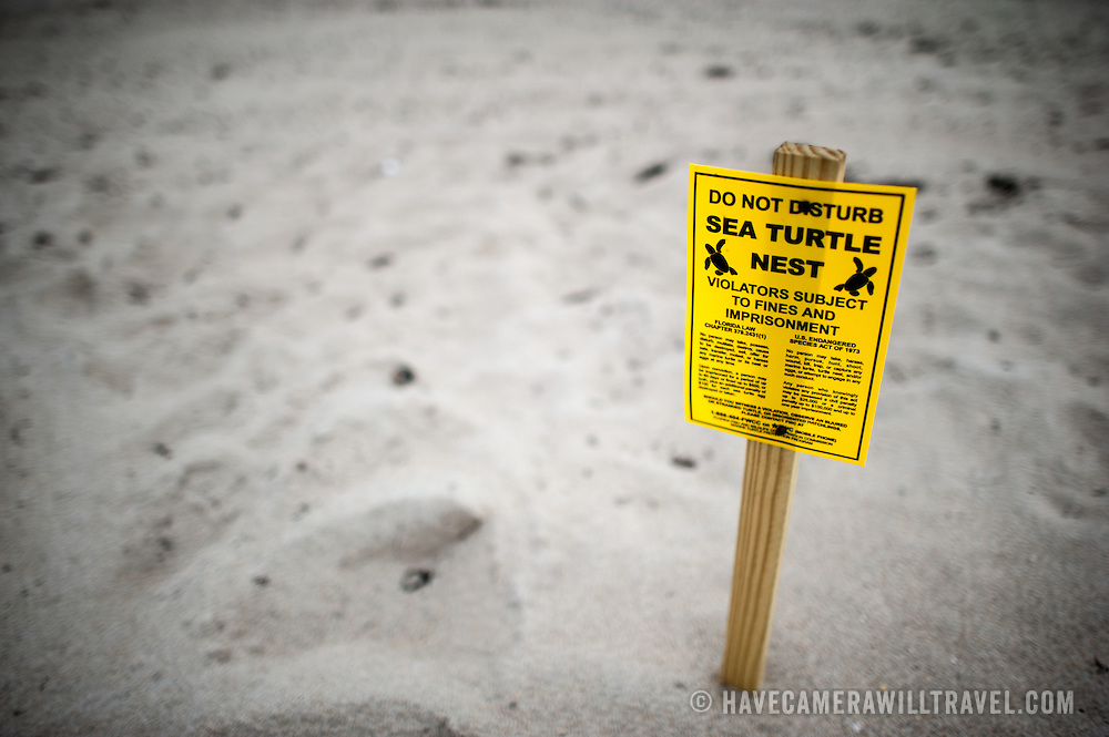 Turtle nesting warning signs in the sand at the beach at Delray Beach on Florida's eastern coastline. Violators who disturb the nest are subject to fines and imprisonment.