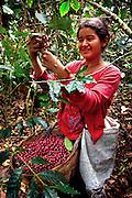 Finca Malacara, Coffee Farm, El Salvador