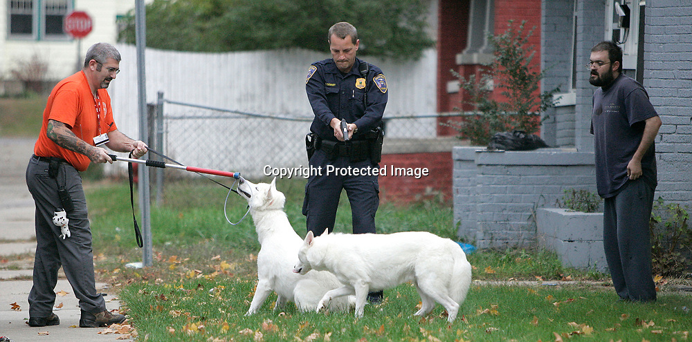 Animal control officer Rex Pemberton (left) attempts to apprehend a dog that mauled a four month old Baby.  South Bend Police Sgt. Eric Downey has his gun drawn at the two dogs for their (the officers') protection.  The person at right is unidentified. 103105