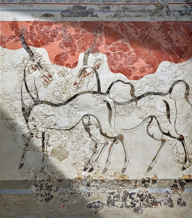 Monoan 'Antelope fresco' Wall painting from Akrotiri, Thira (Santorini). National archaeological Musuem Athens. 17th-16th cent BC.<br /> <br /> The Antelope fresco dep[icts two antelopes sketched with strong dark lines on a white plaster background. Their simple figures are slender and agile, and theri movements reserved are reserved yet expressive. From the same room as the 'Boxing Children' fresco the emsemble may have had a larger symbolic meaning. Room B1, Building B. .<br /> <br /> If you prefer to buy from our ALAMY PHOTO LIBRARY  Collection visit : https://www.alamy.com/portfolio/paul-williams-funkystock/minoan-art-artefacts.html . Type -   Athens    - into the LOWER SEARCH WITHIN GALLERY box. Refine search by adding background colour, place, museum etc<br /> <br /> Visit our MINOAN ART PHOTO COLLECTIONS for more photos to download  as wall art prints https://funkystock.photoshelter.com/gallery-collection/Ancient-Minoans-Art-Artefacts-Antiquities-Historic-Places-Pictures-Images-of/C0000ricT2SU_M9w