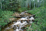 stream in Red Pine Canyon Park City, Utah