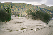 Dune plant community in Doughboy Bay, The Southern Circuit, Stewart Island / Rakiura, New Zealand Ⓒ Davis Ulands | davisulands.com