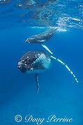 humpback whale mother and calf, Megaptera novaeangliae, near Nomuka Island, Ha'apai group, Kingdom of Tonga, South Pacific