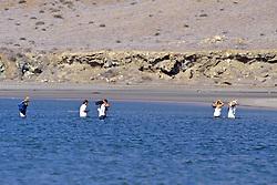 Crossing Salt Water Inlet At High Tide