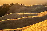 Bolinas Ridge, Mount Tamalpais State Park, Marin County, California