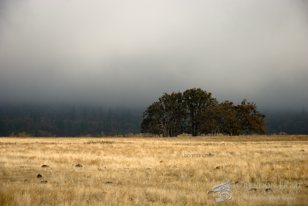 Image was taken on a foggy day In the hills near Hwy 140 on the way from Medford toward Lake in the Woods.  I like the image as it provides a sense of loneliness and isolation.  The yellow field and fog causes your eye to be drawn to the trees.
