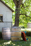 A group of friends gather in the back yard to have a nocino making party. Nocino is a sticky dark brown liqueur from the Emilia-Romagna region in Northern Italy. Nocino is made from unripe green walnuts steeped in spirit. It has an aromatic but bittersweet flavor. Empty wine barrels sit at the base of the walnut tree.
