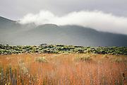 One of many clouds rolls over hills covered with subalpine shrublands, The Southern Circuit, Stewart Island / Rakiura, New Zealand Ⓒ Davis Ulands   davisulands.com