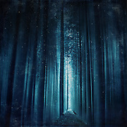 Abstract eerie forest scenery in deep blue tones<br /> Prints & more:<br /> https://society6.com/product/worse-dream_print#1=45<br /> <br /> or<br /> <br /> http://www.redbubble.com/people/dyrkwyst/works/16692893-worse-dream