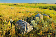 Prairie grasslands and rubbing stones  (West Block) <br /> Grasslands National Park<br /> Saskatchewan<br /> Canada