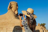Afrique du Nord, Egypte, Louxor, Temple de Louxor, Patrimoine mondial de l'UNESCO, Vallée du Nil, rive gauche du Nil, allée des Sphinx, touriste devant la statue de Sphinx // Africa, Egypt, Louxor, Temple of Luxor, World Heritage of the UNESCO, east bank of the river Nile, Sphinx path, tourist