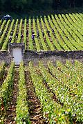 vineyard mercurey burgundy france