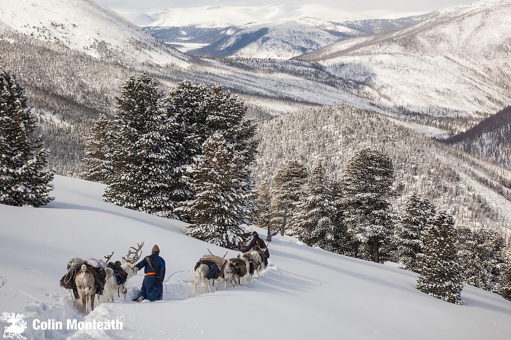 Tsataan reindeer herders, winter in Taiga forest, Hunkher mountains, northern Mongolia