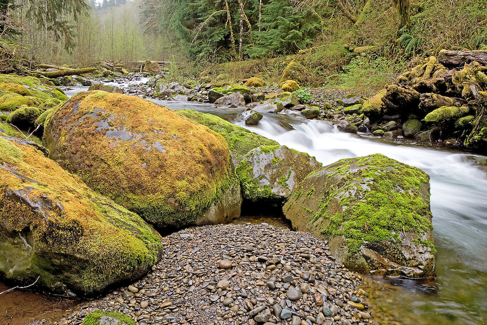 Early Sping on Owl Creek Hoh Rainforest, Washington State
