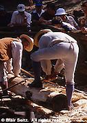 Tree Felling, Ax Work, Goshenhoppen Festival, Montgomery Co.,