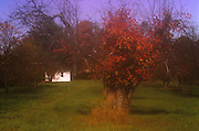 Moonlight Slady's Garage<br /> ©2000 Jeff Becker <br /> All Rights Reserved<br /> 5 Cedar Hill Road<br /> Easton, CT 06612<br /> 203.261.9765<br /> 203.526.4059