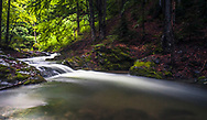 Small river in a beech forest at springtime