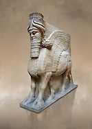Stone statue of a winged bull. From facade m, door K,  Inv AO 19857 from Dur Sharrukin the palace of Assyrian king Sargon II at Khorsabad, 713-706 BC.  Louvre Museum Room 4 , Paris .<br /> <br /> If you prefer to buy from our ALAMY PHOTO LIBRARY  Collection visit : https://www.alamy.com/portfolio/paul-williams-funkystock/ancient-assyria-antiquities.html  Refine search by adding background colour, place, subject, museum etc into the LOWER SEARCH WITHIN GALLERY box to <br /> <br /> Visit our ANCIENT WORLD PHOTO COLLECTIONS for more photos to download or buy as wall art prints https://funkystock.photoshelter.com/gallery-collection/Ancient-World-Art-Antiquities-Historic-Sites-Pictures-Images-of/C00006u26yqSkDOM