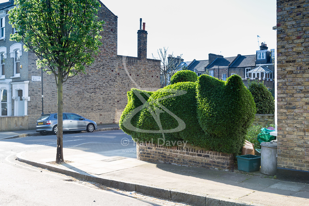 Topiary kittens form the hedge of a house on Balfour Road in Highbury, London. London, April 20 2018.