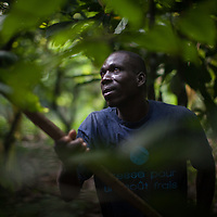 Sermé Doumbia. CAYAWE coop is a Fairtrade-certified cocoa producer based in Aniassue in the Ivory Coast. The coop has nearly 1,500 members and can produce around 5,000 tons of cocoa a year. With the Fairtrade premium from 2015, amongst other things, CAYAWE built a high school for up to 210 students and drilled six wells.