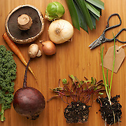 mushrooms, onion, brussels sprouts, kale, carrots, scissors, tool, wood, beet, sprout, white space