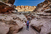 The narrow slot of Little Wild Horse Canyon. San Rafael Swell Recreation Area, Utah, USA. Hike a classic loop from Little Wild Horse Canyon to Bell Canyon, in the San Rafael Reef. This great walk (an 8.6-mile circuit with 900 feet gain) is a short drive on a paved road from Goblin Valley State Park. The hike via fascinating narrow slot canyons and open mesas requires some scrambling over rocks, possibly through shallow water holes (which were dry for us on Sept 20, 2020 but wet in April 2006). Thanks to the greatest legislative victory in the history of SUWA (Southern Utah Wilderness Alliance), in 2019, Congress passed the Emery County Public Land Management Act, which declared 663,000 acres of wilderness, including Little Wild Horse Canyon Wilderness, in San Rafael Swell Recreation Area, Utah, USA. The Navajo and Wingate sandstone of the San Rafael Reef was uplifted fifty million years ago into a striking bluff which now runs from Price to Hanksville, bisected by Interstate 70 at a breach fifteen miles west of the town of Green River.