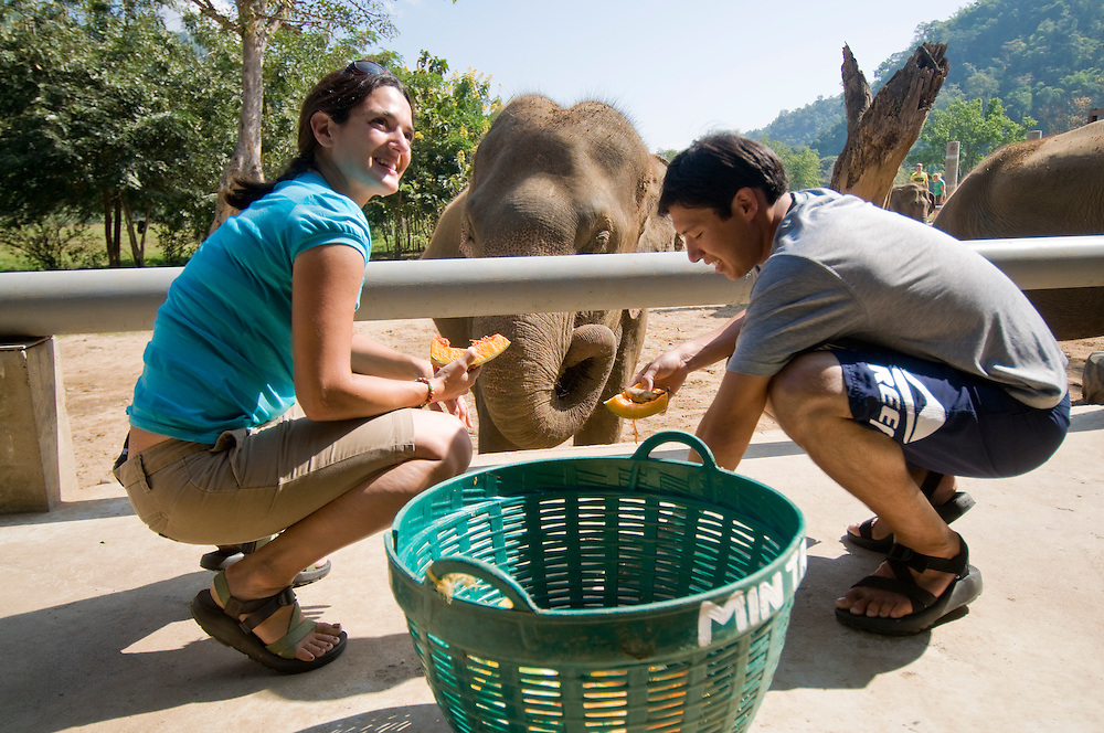 """Tourists and volunteers enjoy feeding the elephants at the Elephant Nature Park near Chiang Mai, Thailand.  Sangduen """"Lek"""" Chailert founded the park as a sanctuary and rescue centre for elephants.  The park currently has 32 elephants sponsored and supported by volunteers from all over the world."""