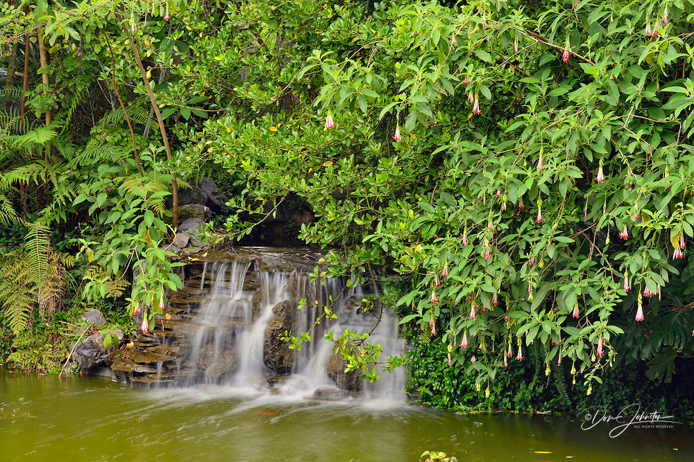 Quito botanical gardens- flowering shrubs a pond, Quito, Pichincha, Ecuador