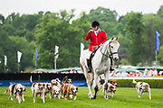 April 29, 2017, 22nd annual Queen's Cup Steeplechase. Fox hounds