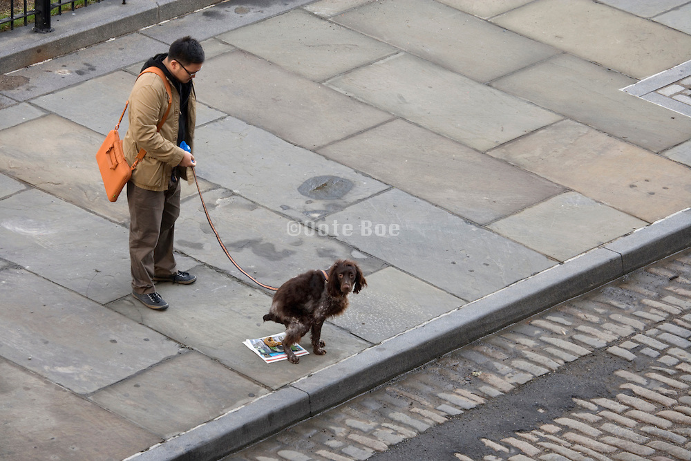 dog pooping on a newspaper with his owner looking on
