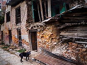 15 MARCH 2017 - BUNGAMATI, NEPAL:  A dog in front of a home damaged in the 2015 Nepal earthquake in Bungamati.  Bungamati, a community of wood carvers and artisans, used to be a stop on the tourist trail of the Kathmandu valley but since the 2015 earthquake few tourists visit the community. Recovery seems to have barely begun nearly two years after the earthquake of 25 April 2015 that devastated Nepal. In some villages in the Kathmandu valley workers are working by hand to remove ruble and dig out destroyed buildings. About 9,000 people were killed and another 22,000 injured by the earthquake. The epicenter of the earthquake was east of the Gorka district.            PHOTO BY JACK KURTZ
