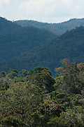 Landscape of Rainforest, Tree top canopy, Ranomafana National Park, Madagascar, Montane Forest