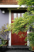 Branches of a japanese maple tree obscure the path to the front door of a home on Phinney Ridge, Seattle, Washington.