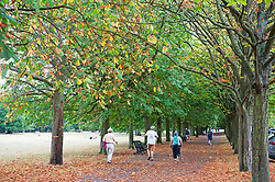 ©Licensed to London News Pictures 17/08/2020             Greenwich, UK. Colourful leaves in the park. Between the heavy rain and thunderstorms the sunshine comes out showing off the early autumnal leaves on the ground in Greenwich park, Greenwich, London. Photo credit: Grant Falvey/LNP